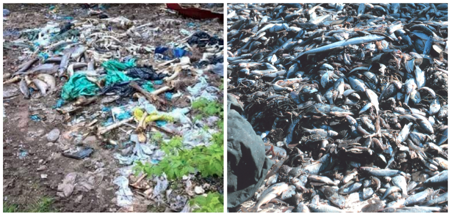 Who is responsible for this bycatch?  Assumption:  One image may (or may not) be a First Nations waste dump.  Fact:  One image is definitely a non-native waste dump?